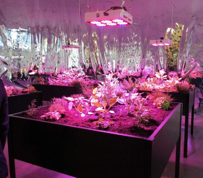 Solar Grow Room
