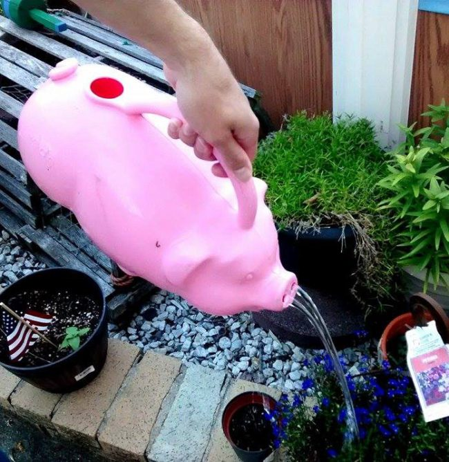 Pink Pig Watering Can
