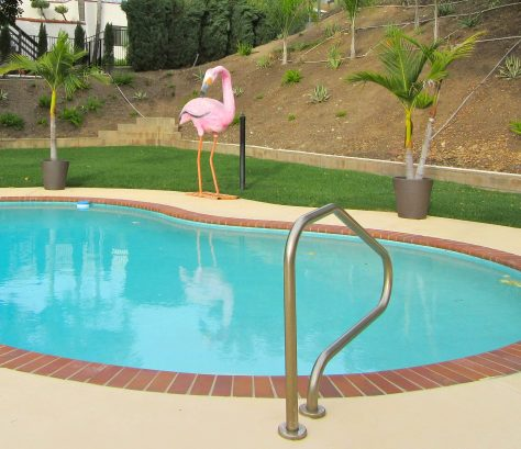 Swimming Pool and Famingo