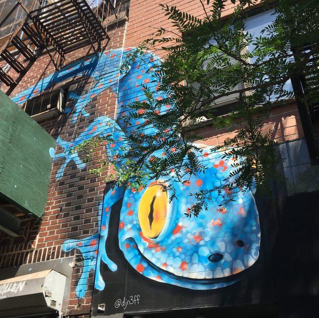 DJN3FF Blue Gecko