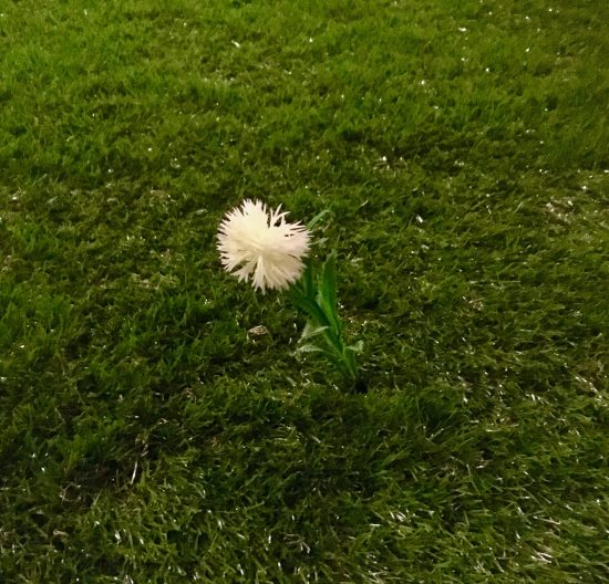 Dandelion Puff By Gail Worley