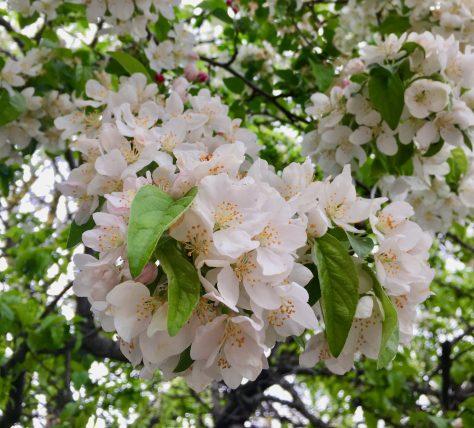 white flowering tree photo by gail