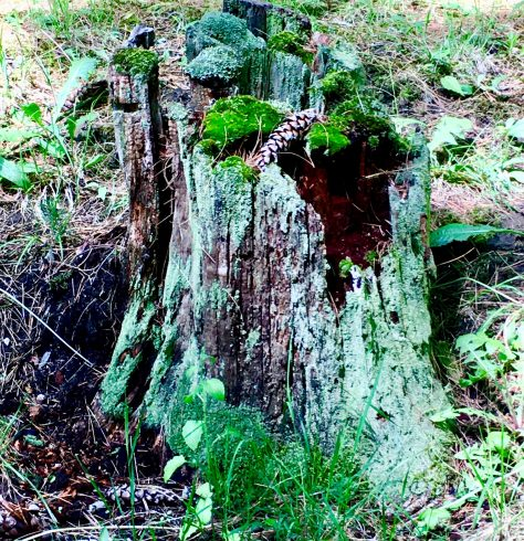 enchanted tree stump photo by gail