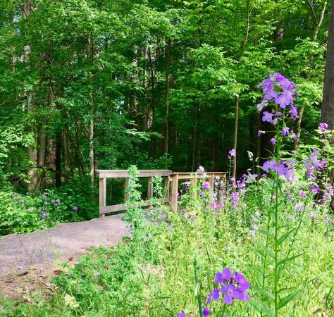 parsons marsh trail photo by gail worley