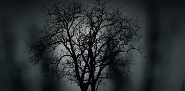 tree-407256_1920_fotor