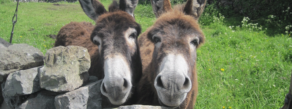 Double-donkeys-24-May-2013-25
