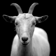 Love-Goating