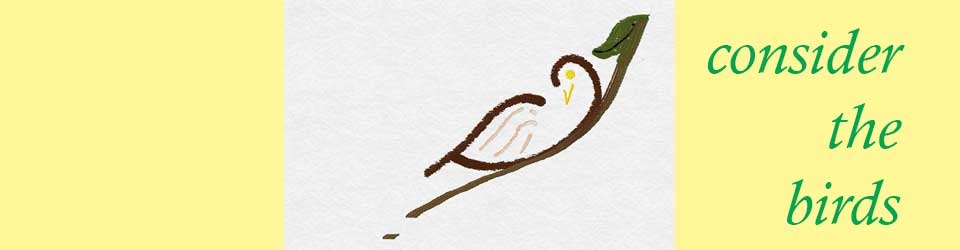 consider-the-birds-banner-pic