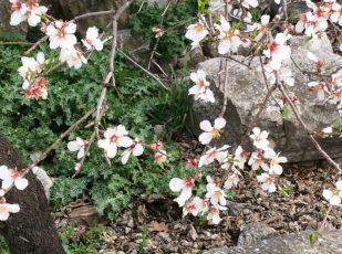 Spring buds, Turkey, by Ana Gobledale