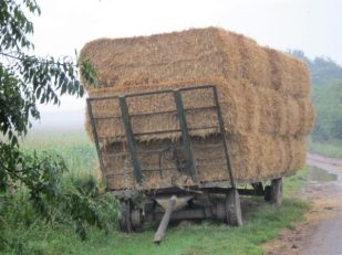 Harvest, Wiltshire UK -- by Ana Gobledale