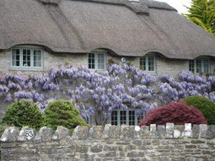 cottage, Corfe Castle, UK -- Ana Gobledale