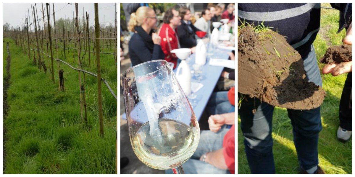 Wijnbouw cursusbij de Brabantse wijnbouwers; dag 2