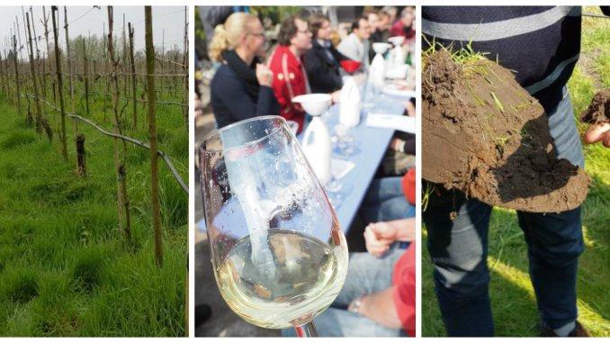wijnbouw cursus