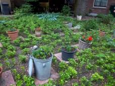 Garten in Delfshaven