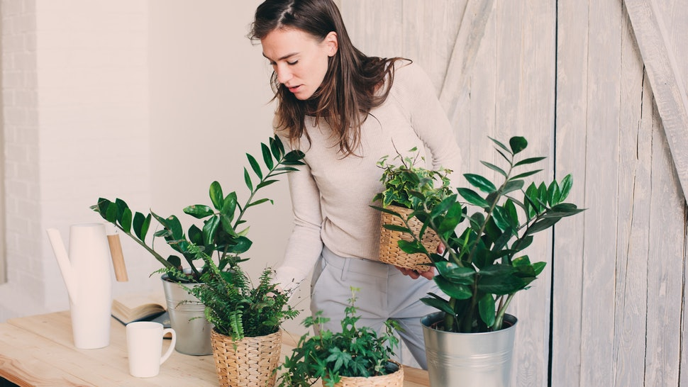 Reducing Stress And Anxiety Through Owning Indoor Plants