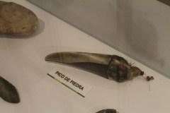 Weapons made from a bird's beak