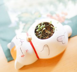 猫咪卡通陶瓷桌面盆栽