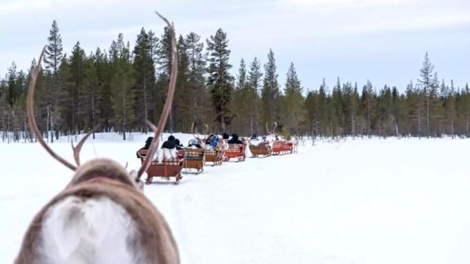 Rentierschlitten in Lappland