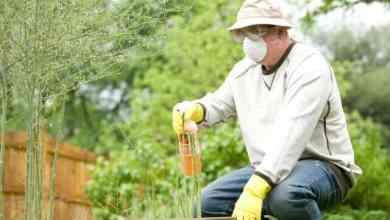 Pest Control Advertising Slogans