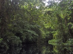 One of the many canals in Tortuguero