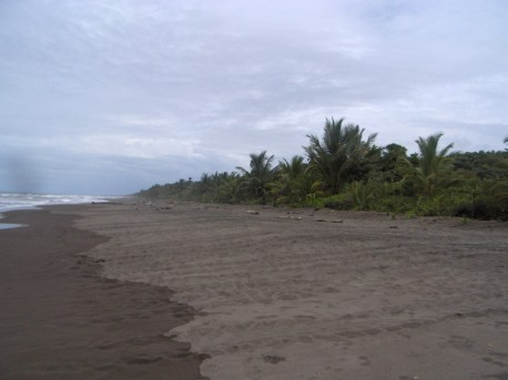 Trails left by the mother turtles