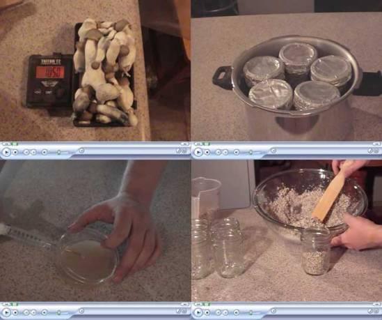 Mushroom Growing 4 You ebook