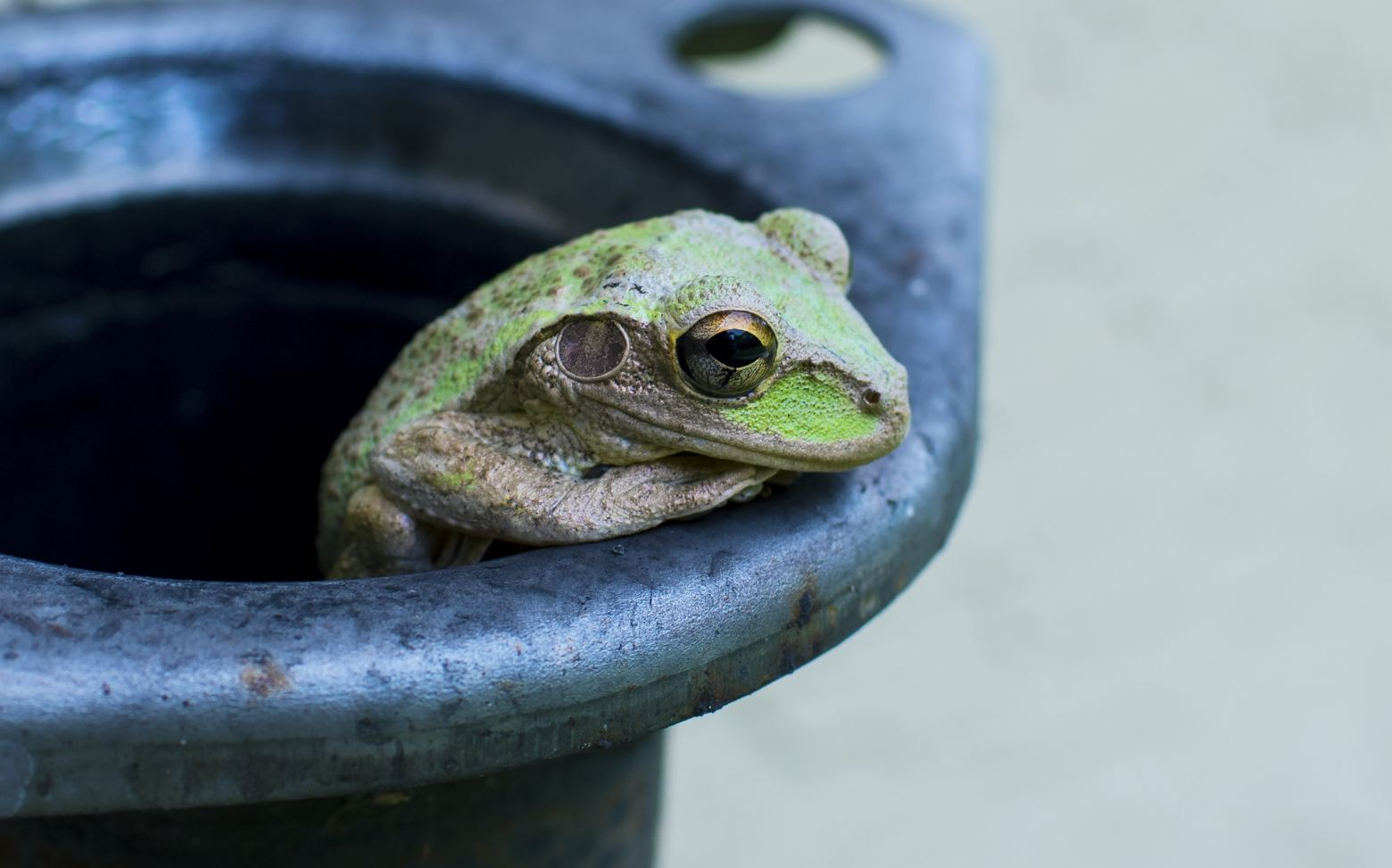 Stop Being A Frog in Your Relationships