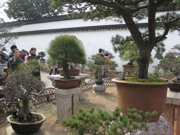 Bonsai Trees at The Humble Administrator's Garden