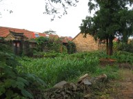 Mixing the Old with the New: old stone walls, solar water heaters, and a small crop of corn.