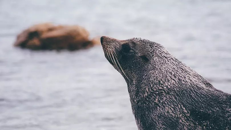 Would Be Traveller Seals in UK