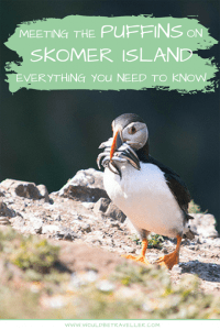 Everything you need to know about meeting the puffins on Skomer Island, from what to bring, when to go and how to get there