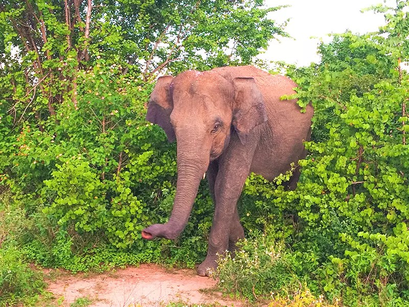 Would Be Traveller Ethical Travel Tips Elephants in the Wild