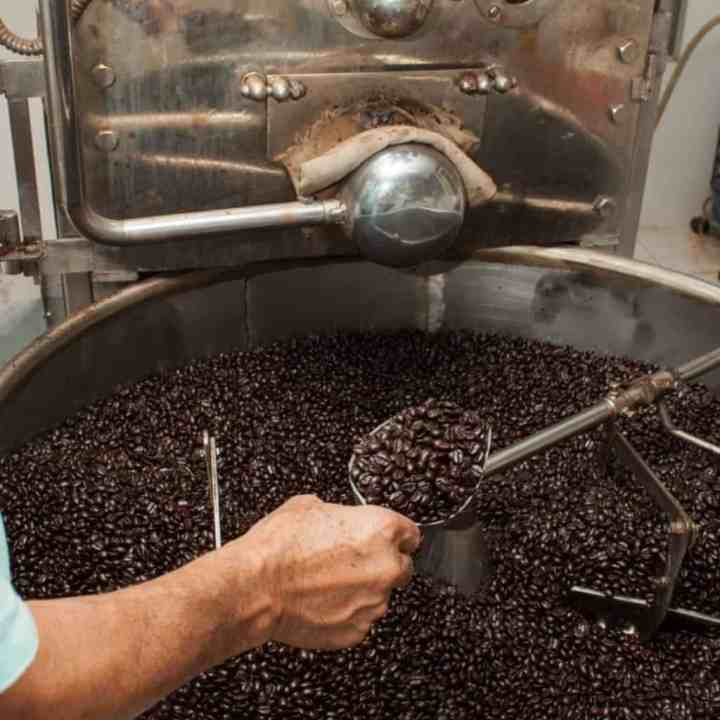 a hand holding a scoop of freshly roasted coffee beans