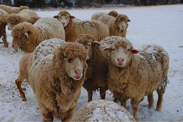 amy-karasz-winter-woollens
