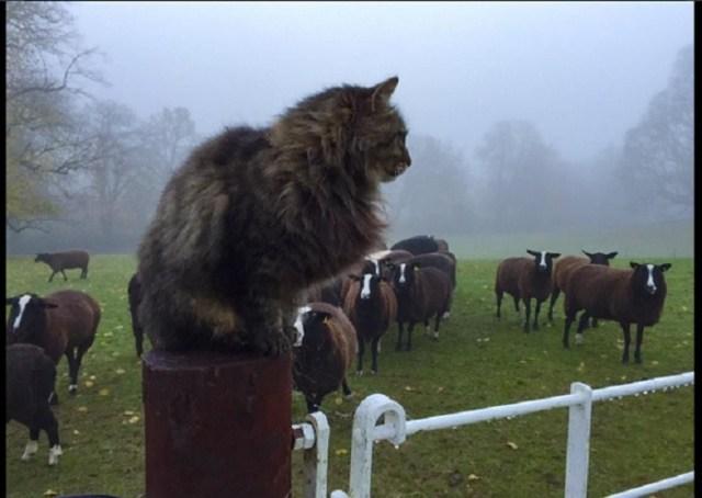 catshep