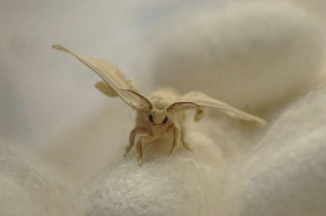 moth_buddy-1