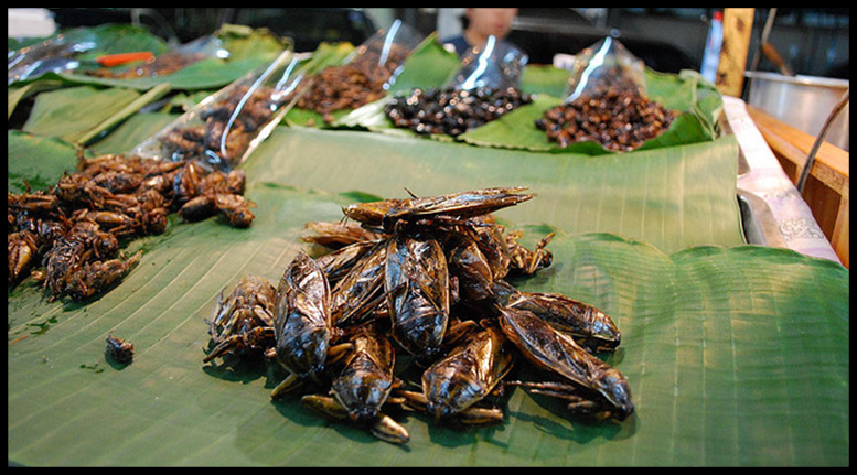 Top 50 Edible Insects List