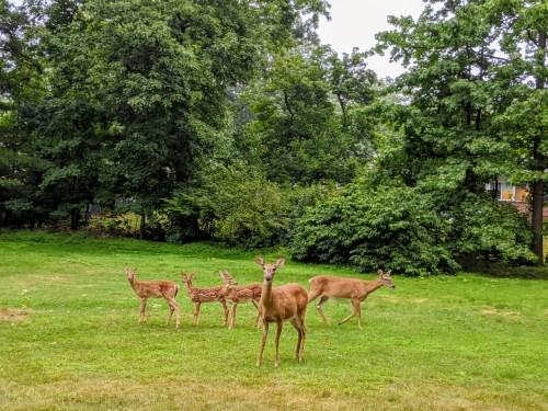 올 해의 사슴 가족