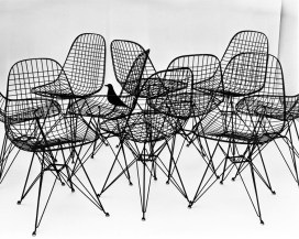 8.-Wire-Chairs-with-bird-1953.-Photograph-Charles-Eames-1024x817