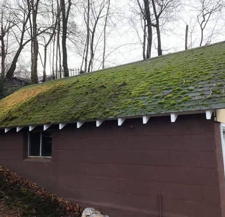 Roof Before Roof Shampoo