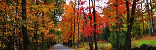 CT Fall Foliage image