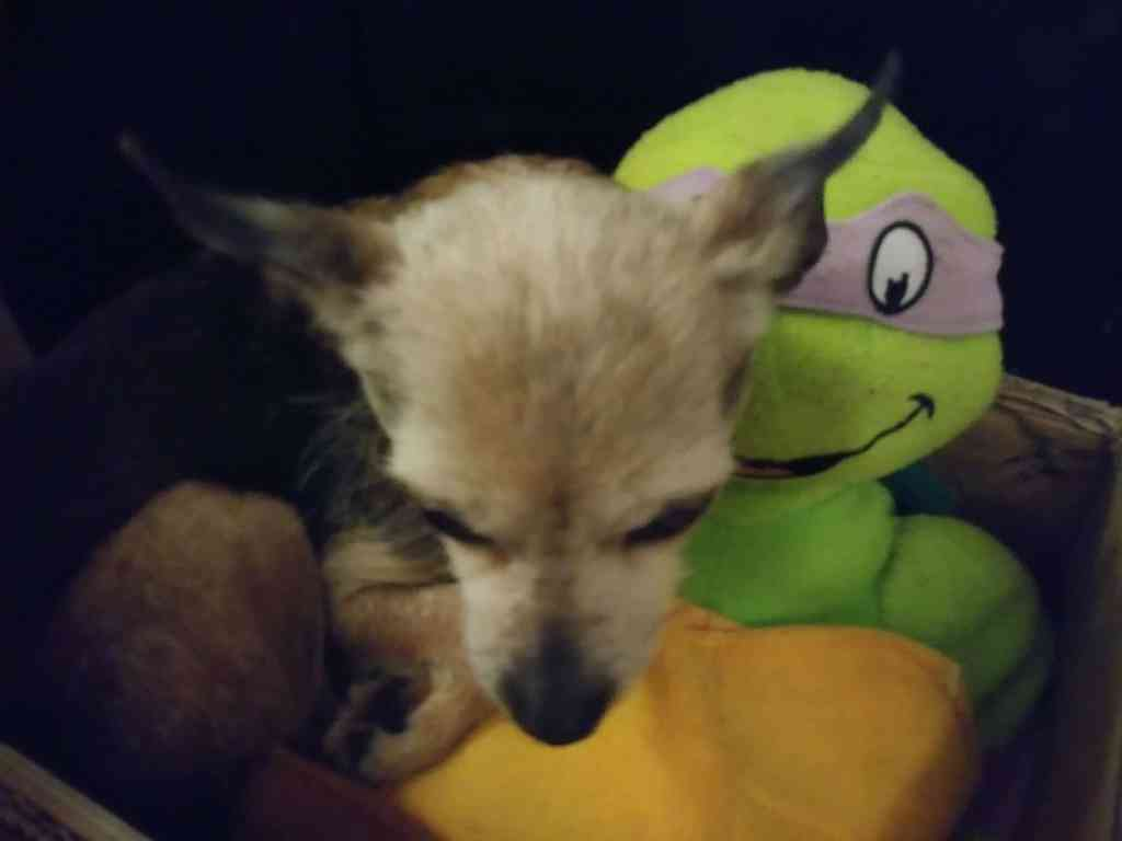 dog cuddling with Teenage Mutant Ninja Turtle stuffed animal