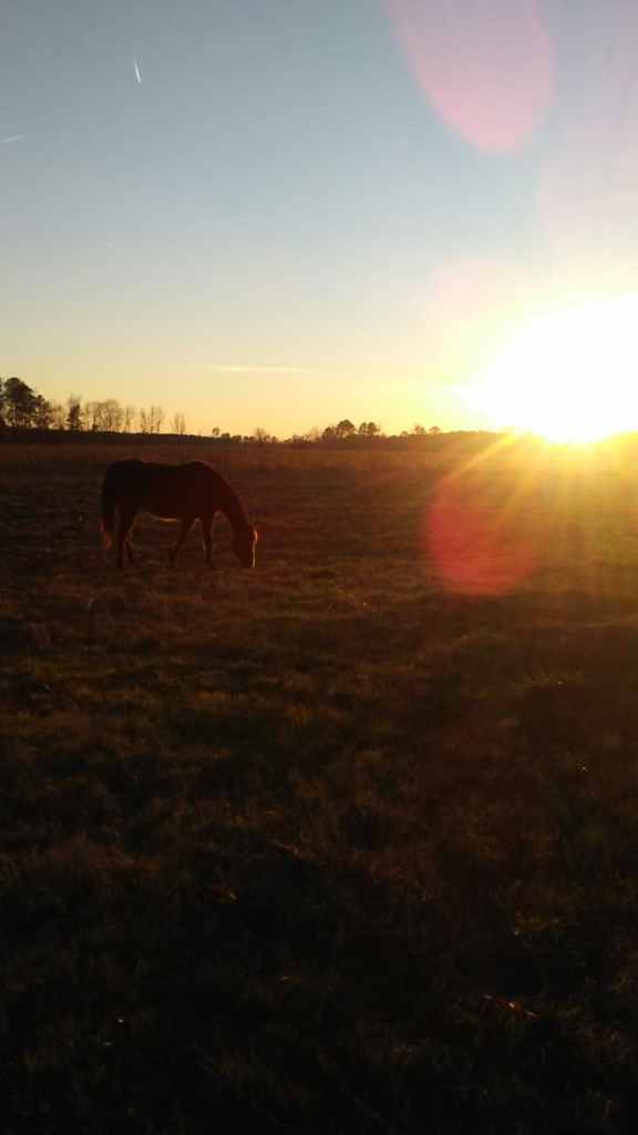 horse at sunset