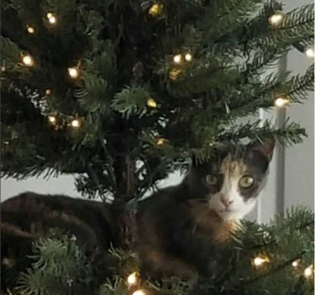 kitty cat in Christmas tree