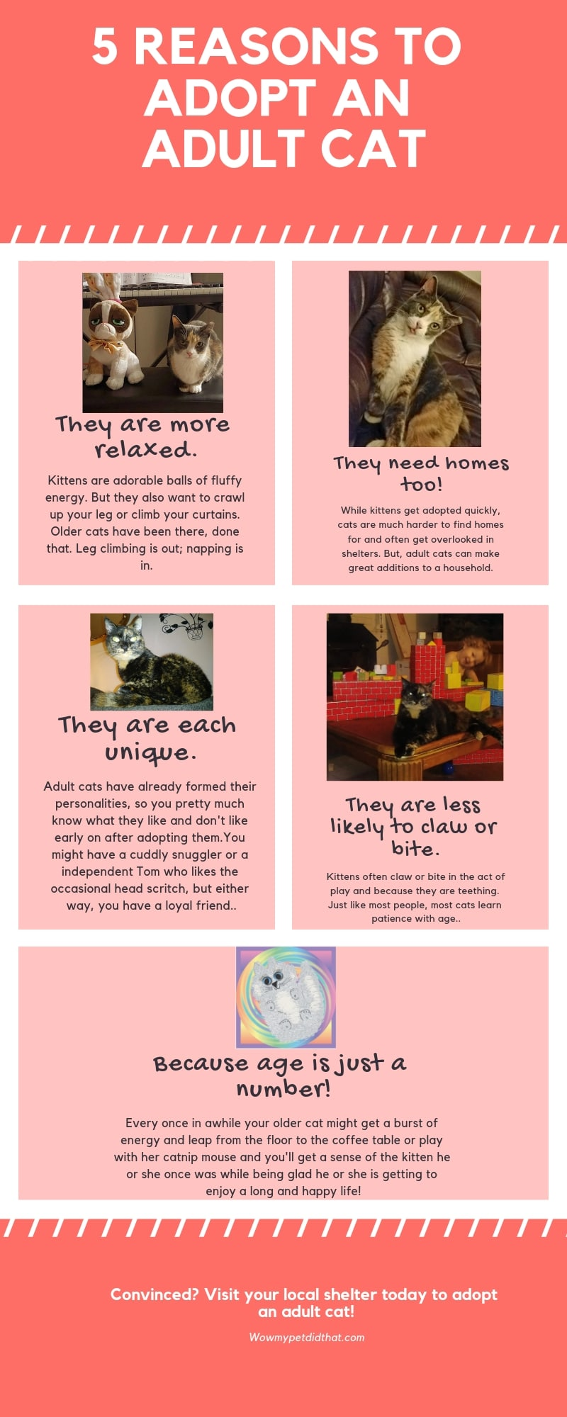 5 reasons to adopt an adult cat infographic