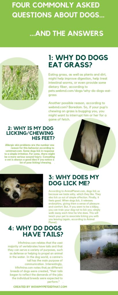 Four commonly asked questions about dogs infographic
