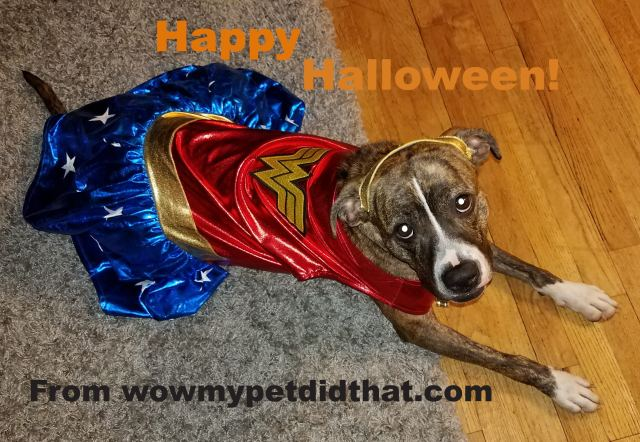 picture of dog with Happy Halloween message