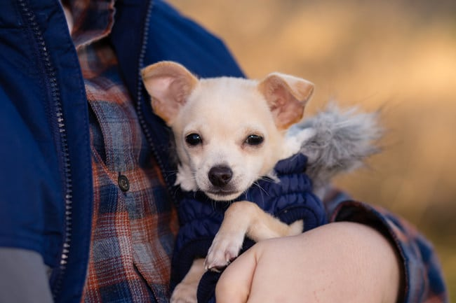 small dog wearing coat