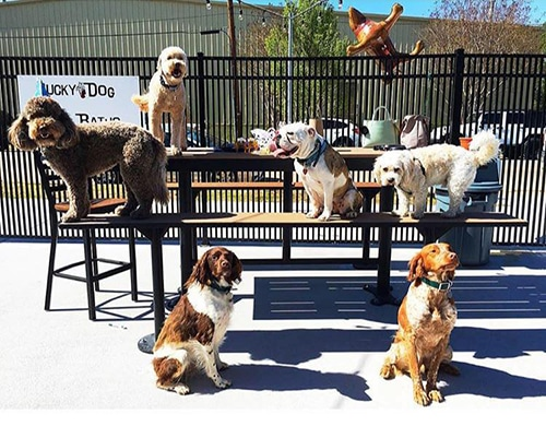 Dogs at Lucky Dog Bark and Brew