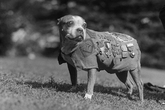 Sgt. Stubby historical photo